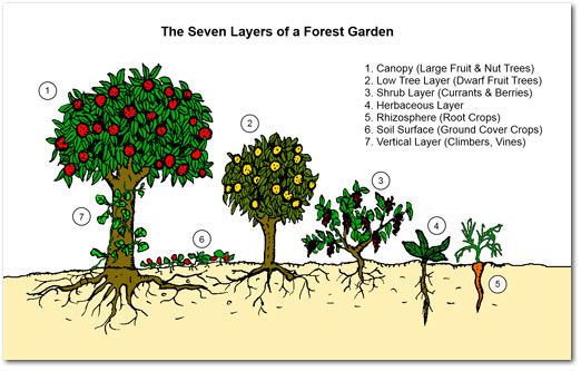 picasso food forest