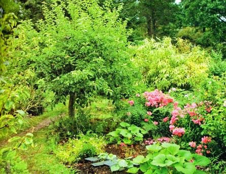 Condividi il progetto - Alberi bassi da giardino ...